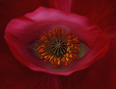 Poppy's Eye Poster by Barbara St Jean