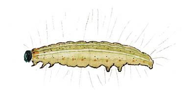 Porphyrinia Paula Caterpillar Poster by Mikkel Juul Jensen