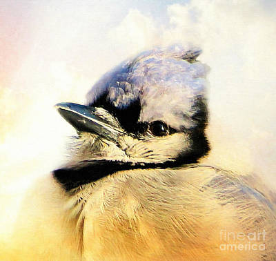 Portrait Of A Blue Jay Poster