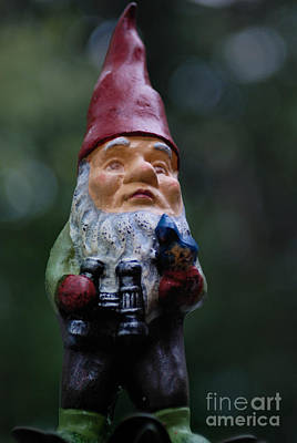 Portrait Of A Garden Gnome Poster by Amy Cicconi