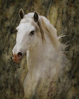 Portrait Of A Horse God Poster
