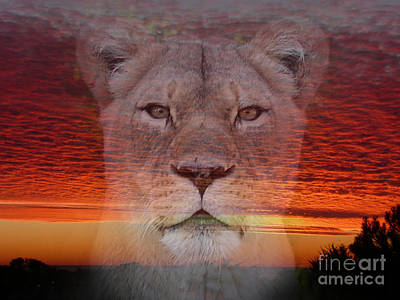 Portrait Of A Lioness At The End Of A Day Poster by Jim Fitzpatrick