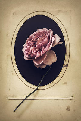 Portrait Of A Rose Poster
