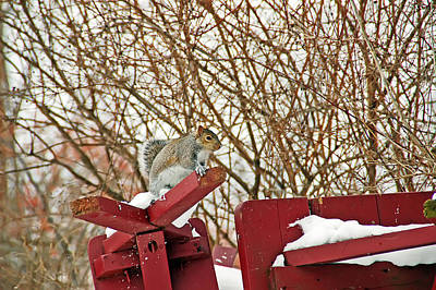 Winter Squirrel Poster by Aimee L Maher Photography and Art Visit ALMGallerydotcom
