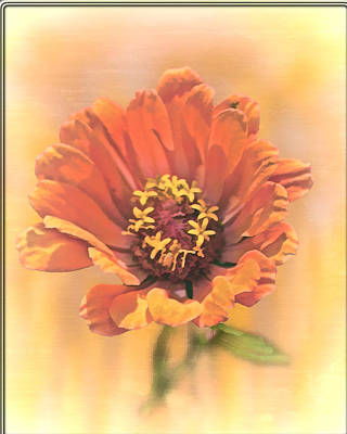 Portrait Of A Zinnia Poster