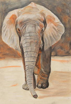 Poster featuring the painting Portrait Of An Elephant by Jeanne Fischer