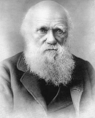 Portrait Of Charles Darwin Poster by Underwood Archives