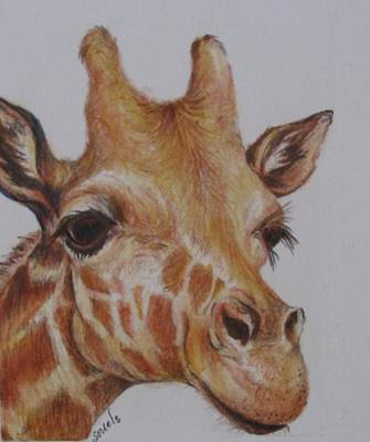 Portrait Of Giraffe Poster