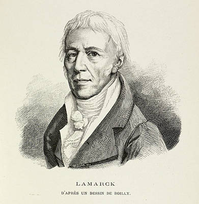 Portrait Of Lamarck Poster by British Library