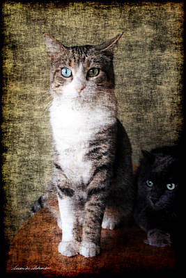 Portrait Of Two Cats Poster by Susan Schroeder