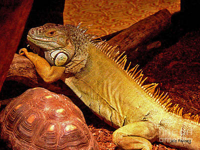 Posing Iguana And Friend Poster