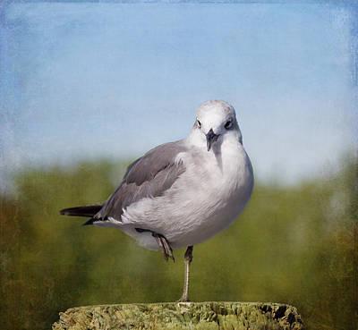Posing Seagull Poster by Kim Hojnacki