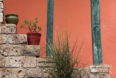 Pot Plants Poster by James Brunker