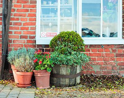 Pot Plants Poster by Tom Gowanlock