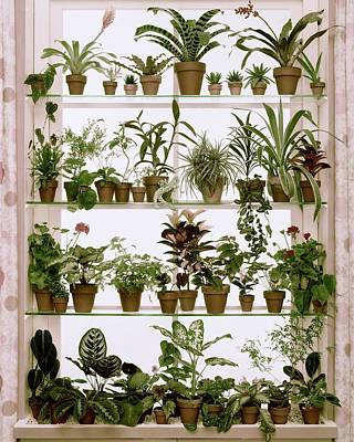 Potted Plants On Shelves Poster by Wiliam Grigsby
