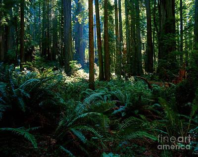 Prairie Creek Redwoods State Park 10 Poster
