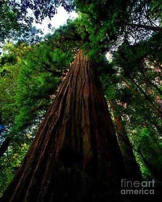 Prairie Creek Redwoods State Park 13 Poster