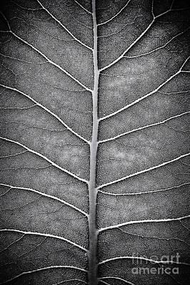 Prairie Dock Leaf Monochrome Poster