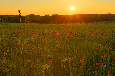 Prairie Flowers With Setting Sun Poster