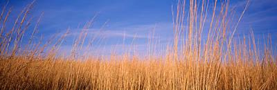 Prairie Grass, Blue Sky, Marion County Poster