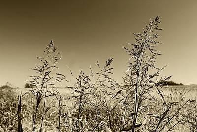 Poster featuring the photograph Prairie Grass by Ellen O'Reilly