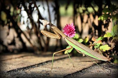 Praying Mantis Poster by Kristin Elmquist