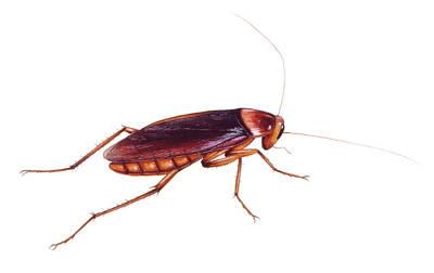 Prehistoric Cockroach Poster