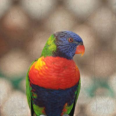 Pretty Bird - Rainbow Lorikeet Poster by Kim Hojnacki