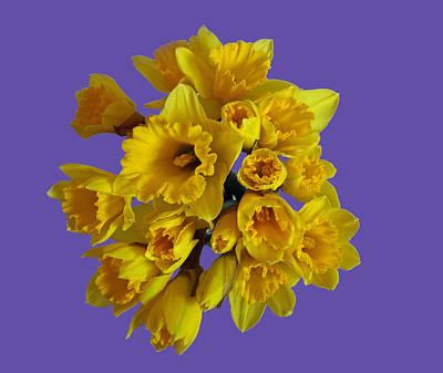 Pretty Daffodils Poster