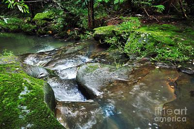 Pretty Green Creek Poster by Kaye Menner