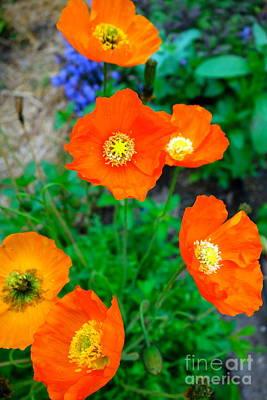 Pretty In Orange Poster by Jacqueline Athmann