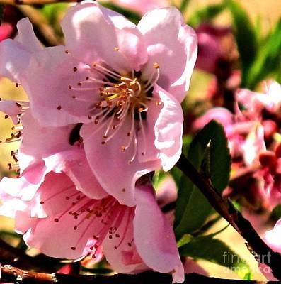 Pretty In Pink Spring Flowers Poster by Michaline  Bak