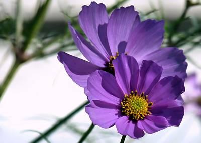 Pretty In Purple Poster by Janice Drew