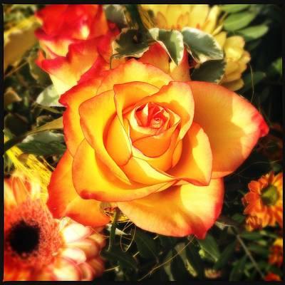 Pretty Orange Rose Poster by Matthias Hauser