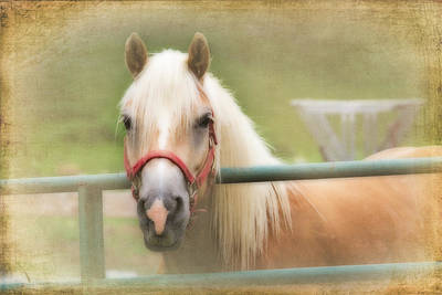 Pretty Palomino Horse Photography Poster