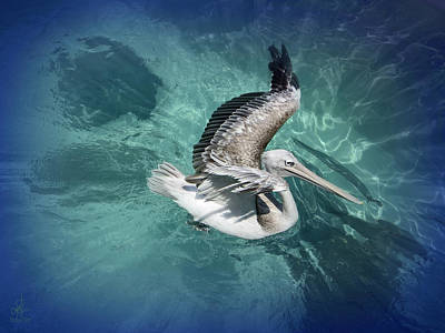 Poster featuring the photograph Pretty Pelican by Pennie  McCracken