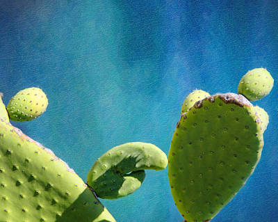 Prickly Pear Art Poster by Vicki Jauron
