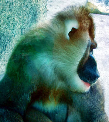 Poster featuring the photograph Primate 1 by Dawn Eshelman