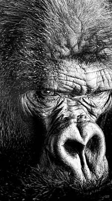 Primate Poster by David Millenheft