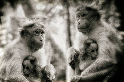 Primate Mothers And Babies Poster