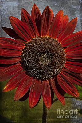 Primitive Sunflower 2 Poster