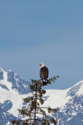 Prince William Sound, Alaska, A Bald Poster by Hugh Rose