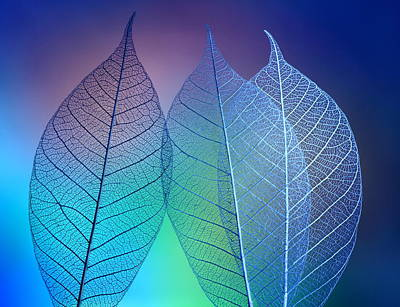 Prismatic Leafs Poster