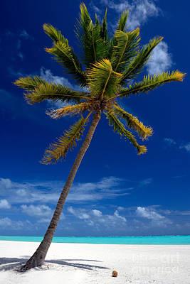 Pristine Tropical Beach  Poster