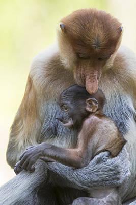 Proboscis Monkey Mother Holding Baby Poster