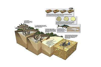 Process Of Fossilization Poster by Jose Antonio Pe�as
