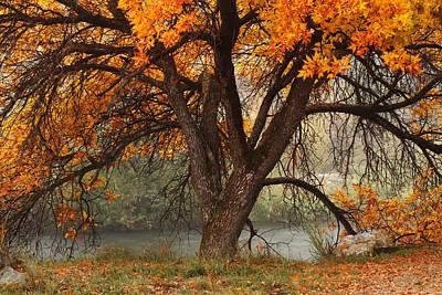 Provo Autumn #1 Poster