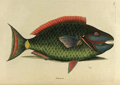 Psittacus Piscis Viridis Poster by British Library