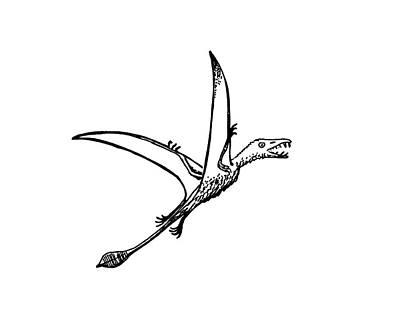 Pterosaur Eudimophodon Poster