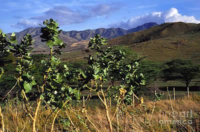 Puerto Rico Cayey Mountains Near Salinas Poster